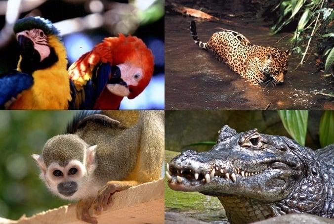 fauna amazonas