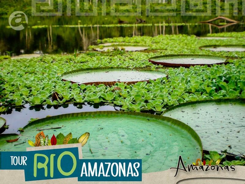 Banner Tour Rio Amazonas