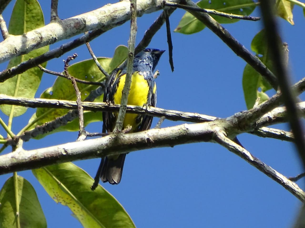 Avistamiento aves Amazonas (1)