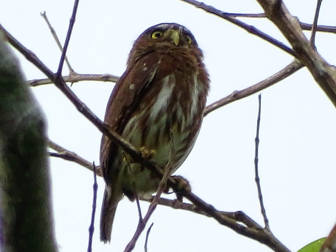 Avistamiento aves Amazonas (7)
