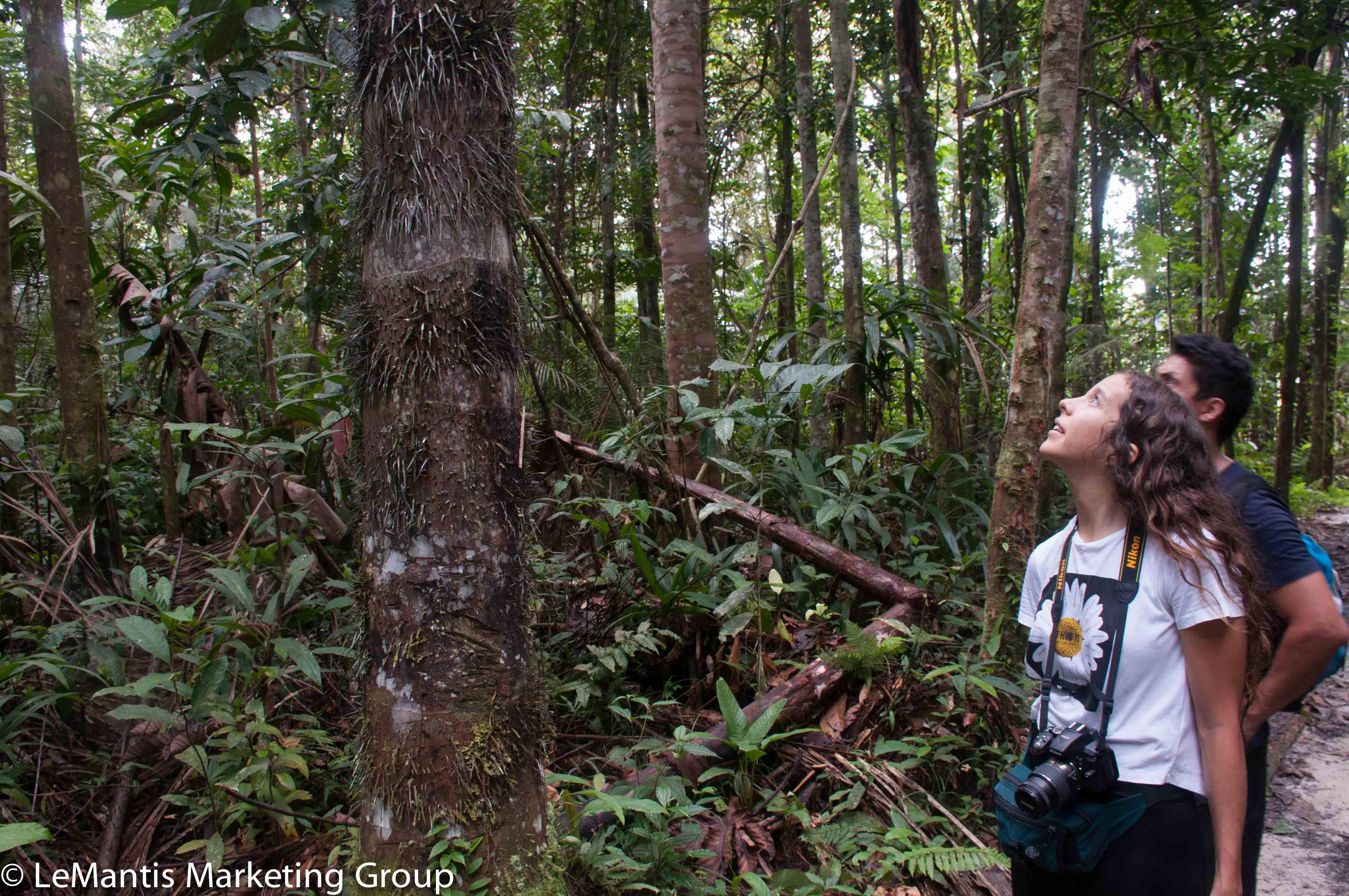 avistamiento de aves amazonas (2)