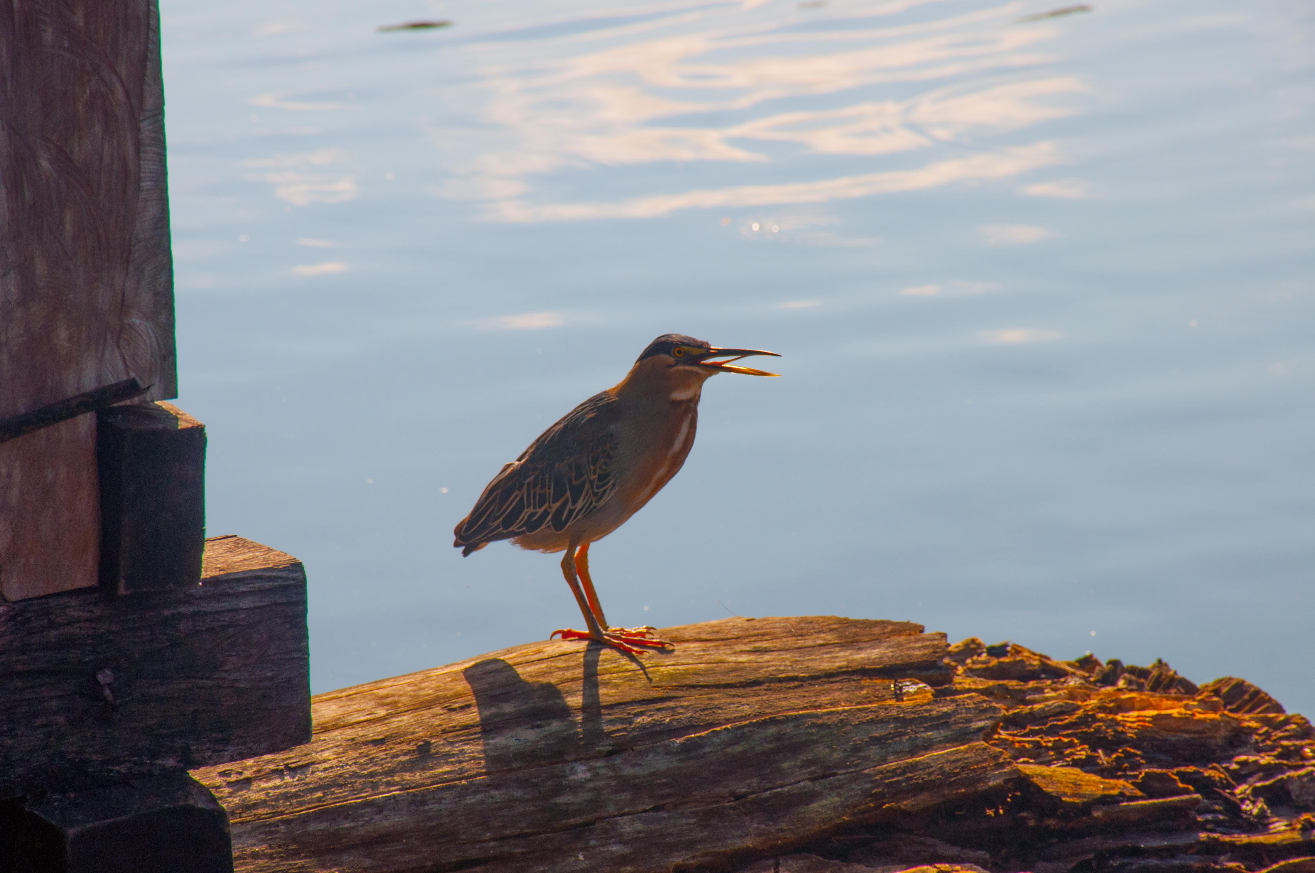 avistamiento de aves amazonas (4)
