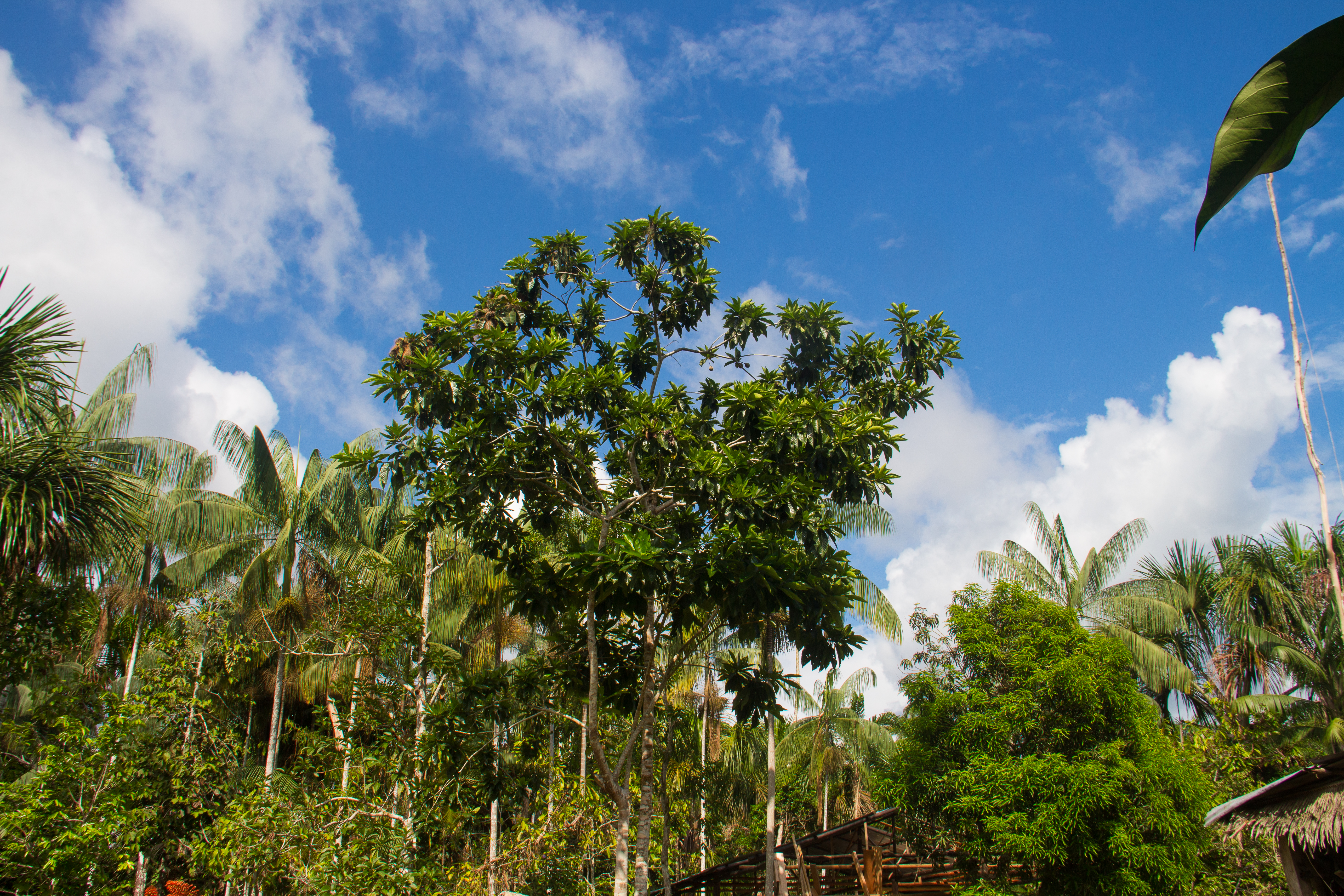 Amazonas Colombia 1