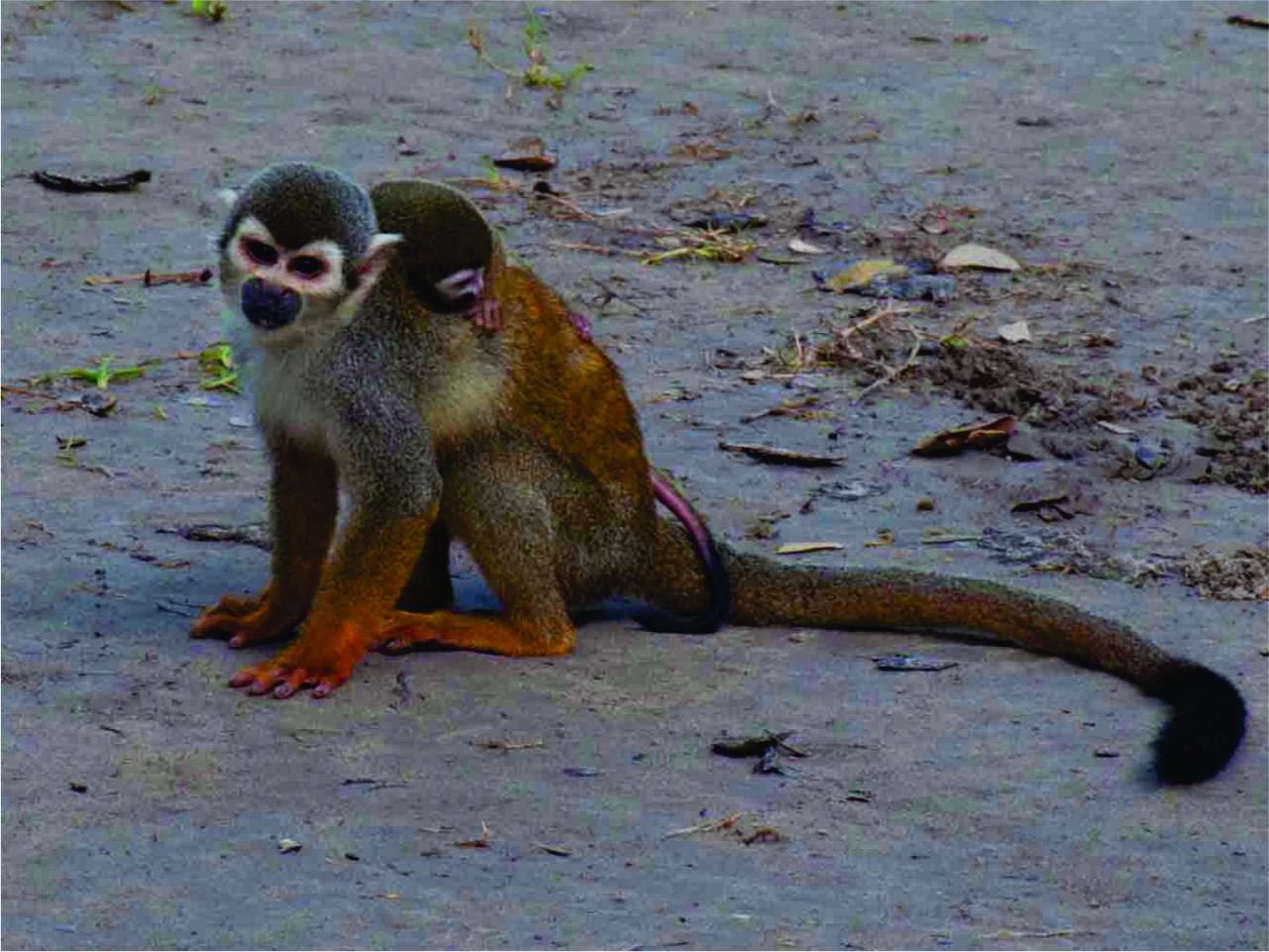 isla de los micos  1