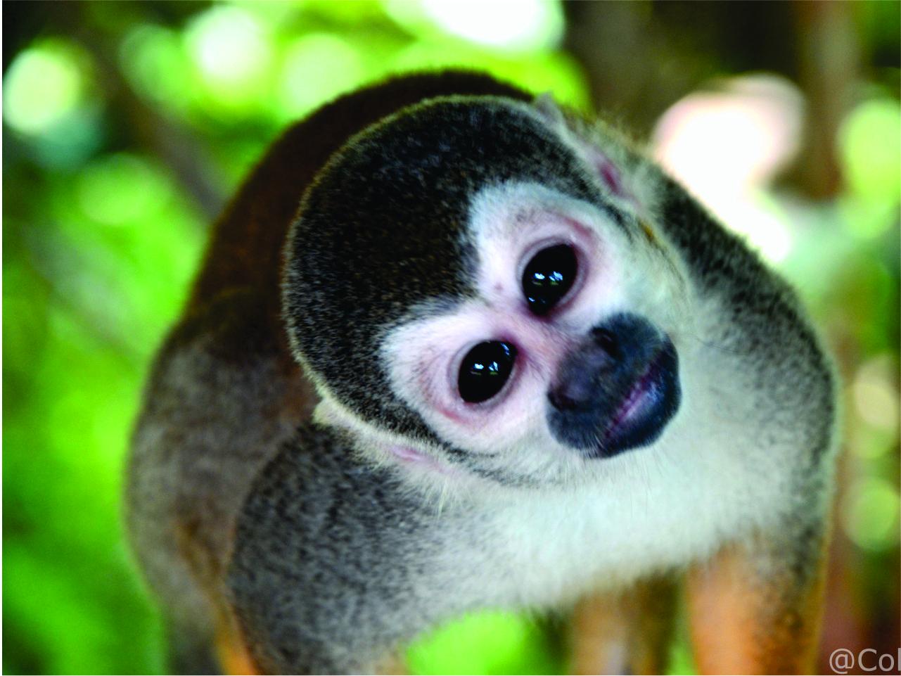isla de los micos 3